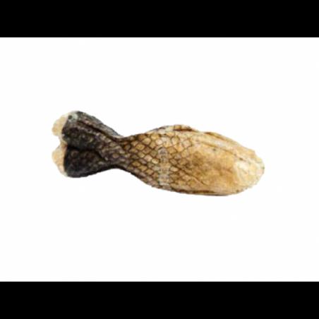 ESP Kość Rybka 12cm